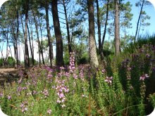 image: wild flowers in the forest at Euronat
